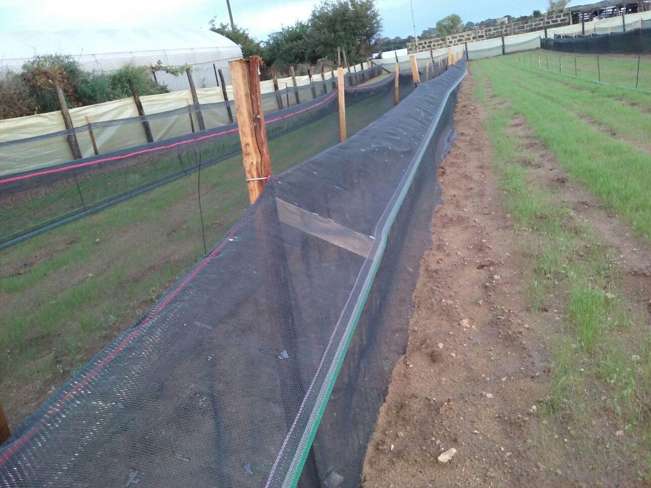 rete con balza, cordonata lunghezza 100 m.